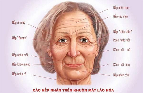 Các nếp nhăn trên khuôn mặt lão hóa