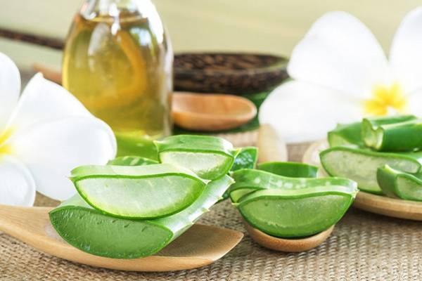 Nha đam - dầu dừa là nguyên liệu dễ tìm, có khả năng xóa nhăn rãnh mũi má tốt