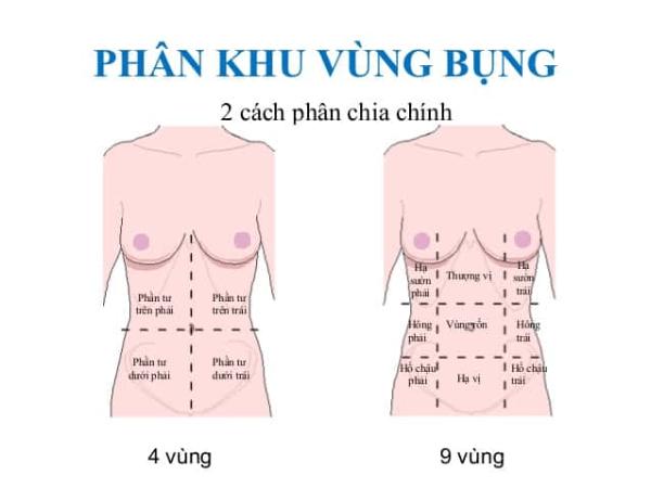 vùng hông được tính là 2 vùng hông phải và hông trái, còn vùng bụng là toàn bộ vùng bụng dưới