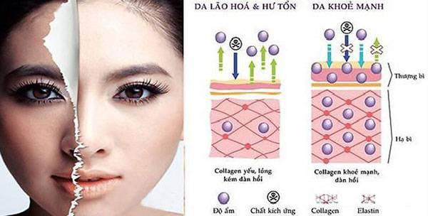 Collagen có vai trò rất quan trọng đối với da