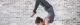 Tập Yoga: Có giảm cân hay không & 1 số bài tập tốt nhất